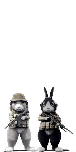 zajci